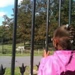 Nyomi Banks, 6, of Dorchester peeked at a zebra through the gates of the Franklin Park Zoo.