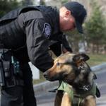 HOLLISTON, MA Feb 16, 2012 --Westford Police Officer Corey Peladeau (cq) puts SWAT vest on his K-9 Beny (cq) , 2 1/2, as he gets ready for K9 demonstration after Massachusetts Vest-A-Dog announced grants totalling $17,000 to multiple law enforcement agencies today at the Holliston Police Department. Peladeau wrote in his grant application