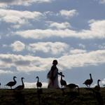 Runners, walkers, and cyclists walked along a path by a flock of geese at the Chesnut Hill Reservoir on Monday.