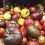 Heirloom tomatoes at Copley Square farmers' market in Boston.