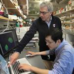 Douglas Melton, co-director of the Harvard Stem Cell Institute (back) and post-doctoral researcher Peng Yi discovered a hormone that in early experiments increased the number of insulin-producing cells in the pancreas.