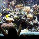 The coral reef tank at the New Bedford Explorium.