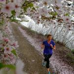A runner passed under flowering trees in bloom along the Charles River in Cambridge.