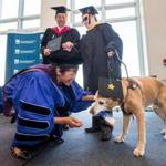 Connie Chan and Ira Jackson, associate dean and dean of McCormack Graduate School at UMass Boston, presented William O'Donnell and his guide dog Marshall with diplomas during the 2014 commencement.