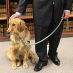 Suffolk County District Attorney Daniel F. Conley introduced Indy, a facility dog, during a press conference in Boston on Thursday.