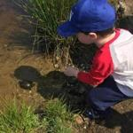 A child releases one of the turtles into the pond.