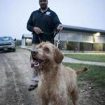 Bobby, a wire-haired vizsla, at the TSA's canine training center at Lackland Air Force Base in San Antonio.