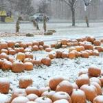 Snow covered a pile of pumpkins for sale at Whitney's Farm Stand Market in Cheshire, Mass.