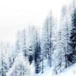Beautiful winter landscape with snow covered mountain forest