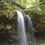 Walk behind a waterfall at Grotto Falls in the Smokies.