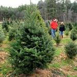 East Bridgewater 11/20/2016 : Matthew and Megan Krugger (cq) walk through their Mistletoe Acres Tree Farm in East Bridgewater. Photo by Debee Tlumacki for the Boston Globe (south)