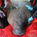 """Washburn"" was rescued from cooling waters near Falmouth in September."