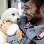 An officer held up one of the three puppies that were found alive in the rubble of the avalanche-hit Hotel Rigopiano, near Farindola, central Italy.