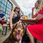 "Emily Bordenski (left) and Betsy Meharg sat with Oswin during a ""yappy hour"" at Dorchester Brewing Company."