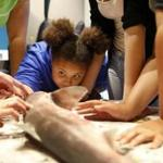 Olivia Ivy, 10, of Malden (center) got an up close look at a dogfish shark as she and other girls gathered with female scientists to dissect a dogfish shark as part of the