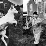080518connections - Mildred Jewett, aka Madaket Millie, holds her white German shepherd, Snoopy, on Nantucket circa 1982. AND Mildred Jewett, aka Madaket Millie, on Nantucket (right) in an undated photo. (Stan Grossfeld/Globe Staff)