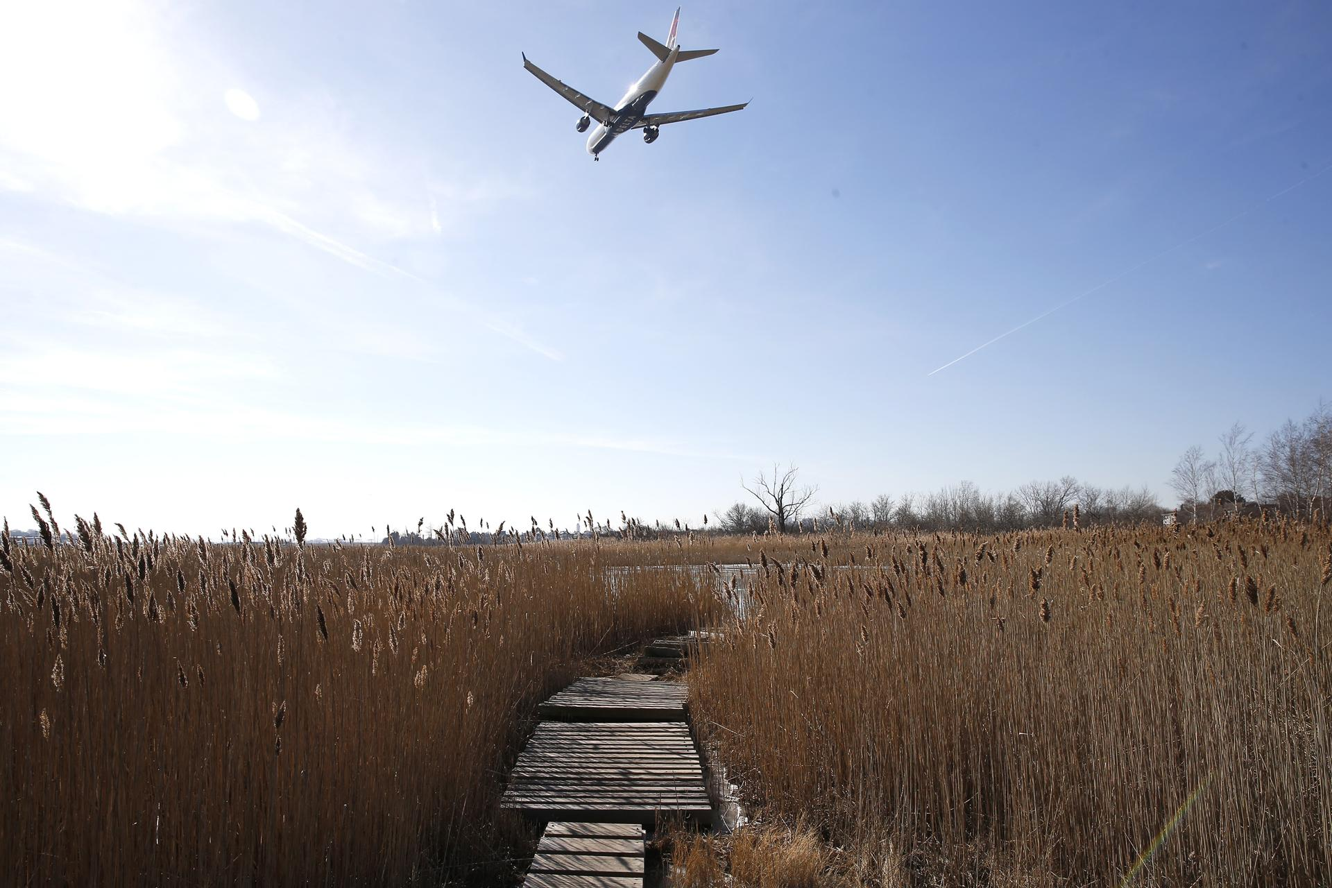 Planes frequent the skies over Belle Isle Marsh in East Boston.