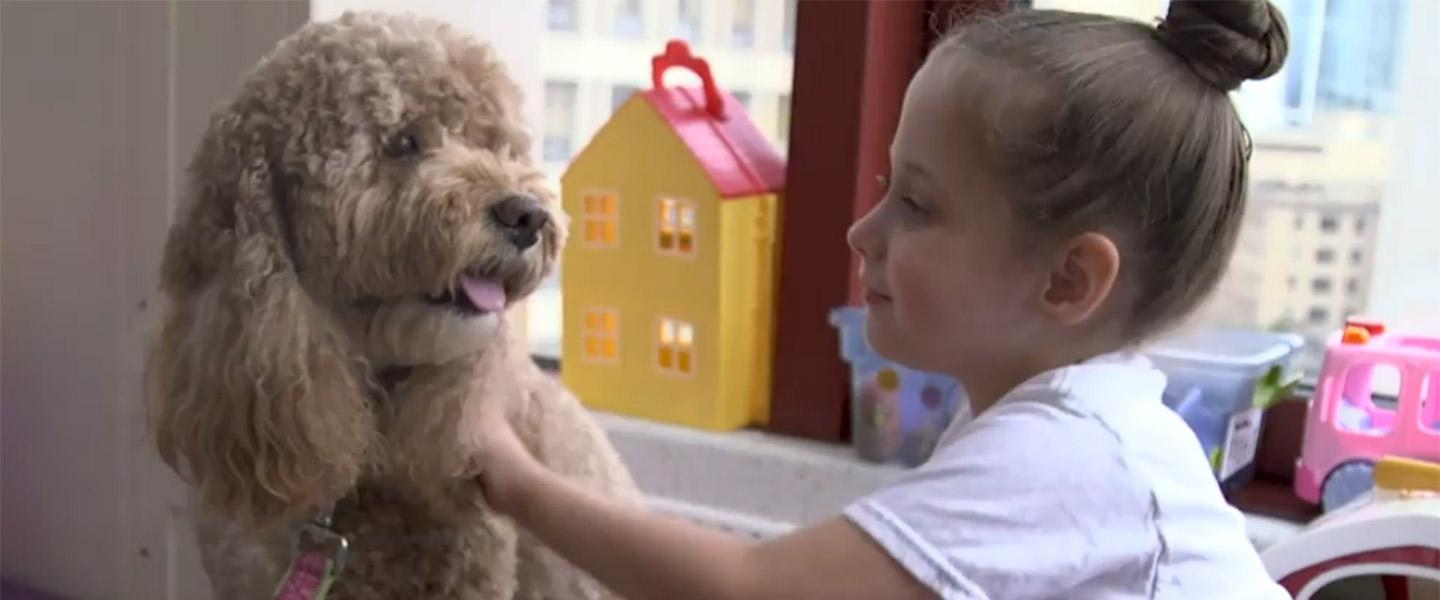 Meet the therapy dogs of Boston Children's Hospital