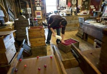 Jamie West fills a crate for a customer; Left: A basket of berries ready for sale.