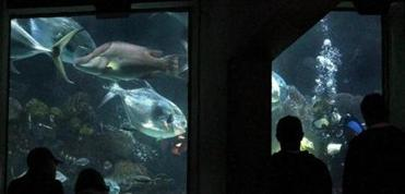 Patrons watch as senior aquarist Chris Bauernfeind  feeds fish from the whole bucket at the New England Aquarium.