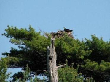 The osprey nest at Wolfe's Neck Woods State Park can be viewed with binoculars.