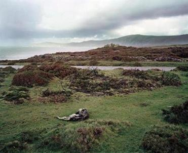 "The photograph ""Dead Dog"" shows a carcass in the foreground of a landscape green with life."