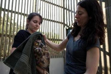 "Clinic intern Nicole Rose holds ""Soccer Bird"" for his prerelease exam by Tufts veterinarian Maureen Murray."