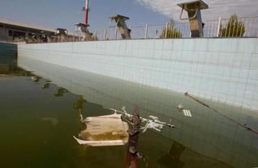 Frogs sit on garbage floating in the murky waters of an abandoned training pool at the Olympic Village in Athens.
