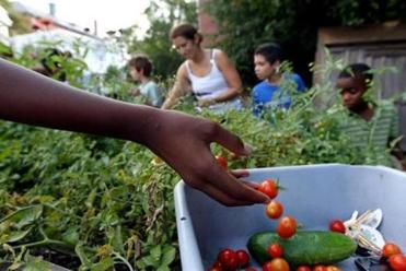 Members of a church youth group harvest tomatoes in the garden in August.