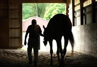 A jockey at Briar Hill Farm in Rehoboth walked a two-year-old thoroughbred through the stable.