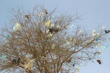 Plastic bags in a tree.