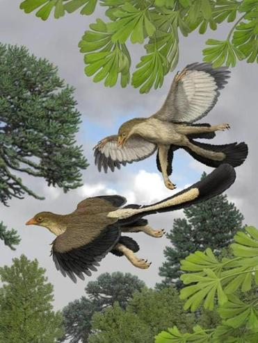 Archaeopteryx may not have been very good at flying.