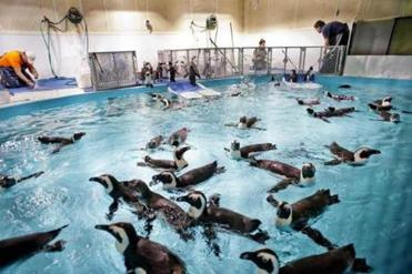 The New England Aquarium's splashy new look - The Boston Globe