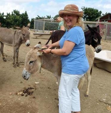Volunteers took care of feral donkeys on Antigua.