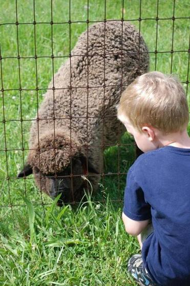 "Kids will learn how fleece becomes a sweater on the ""Sheep-to-Sweater Interpretive Trail."""