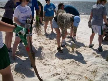 Dune grass restoration project on a beach in Biloxi, Mississippi.