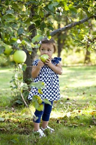 The best backyard fruit trees for New England  The Boston Globe