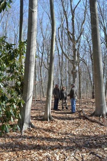 From left, hikers Dan Rawling, Barbara Russell-Willett, and Tom Willett among the old-growth American beech trees in Oakland Forest on Aquidneck Island.