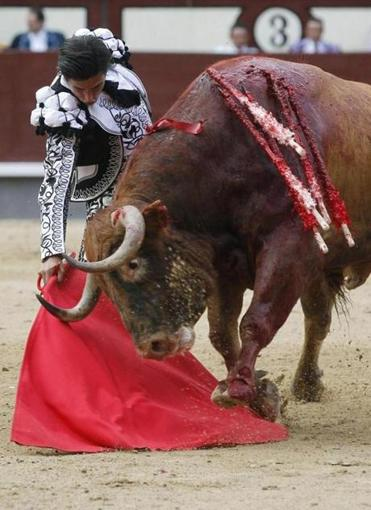 A bull bled heavily during a fight in Madrid earlier this month.