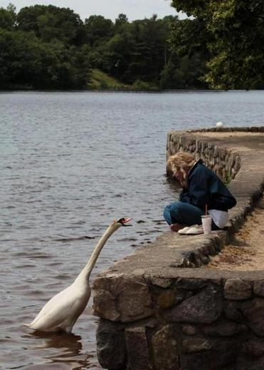 Liza Lentini of Braintree sat by a swan at Braintree's Sunset Lake.