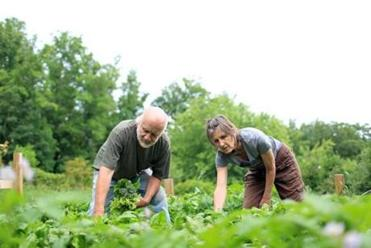Steve Norris, shown gardening with his wife, Kendall Hale, is a professor of environmental justice at Warren Wilson College in North Carolina. Recent redistricting leaves left-leaning denizens of Asheville with little hope for change.