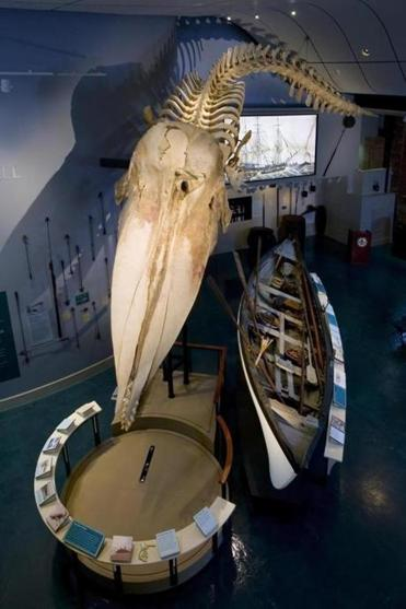 A 46-foot sperm whale skeleton at the Whaling Museum on Nantucket.
