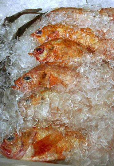 Ocean perch for sale at Harbor Fish Market in Portland.
