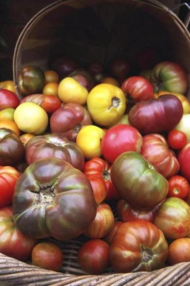 Heirloom tomatoes at Copley Square farmer's market.