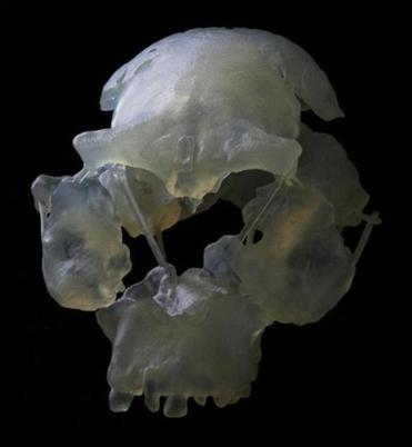 The digitally created skull.