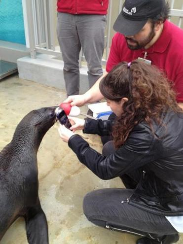 Olin junior Riva Kahn Hallock used her iPhone device for performing cornea examinations to check a seal at the Vancouver Aquarium. Hallock worked on the instrument with Eidolon Optical of Natick, where she is employed 10 hours per week.