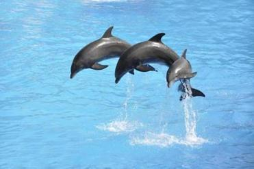 Many of our cherished beliefs about dolphins are not supported by scientific evidence, says one researcher.
