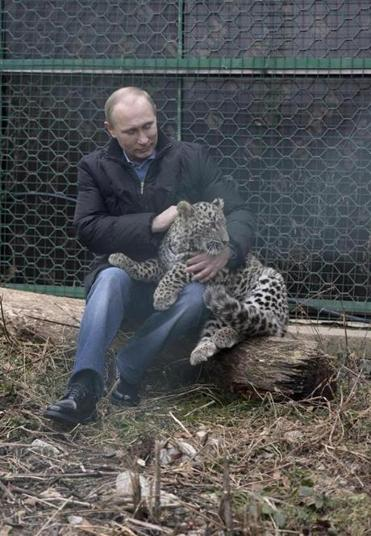 Russian president Vladimir Putin holds a Persian leopard at a breeding and rehabilitation center near Sochi Tuesday.