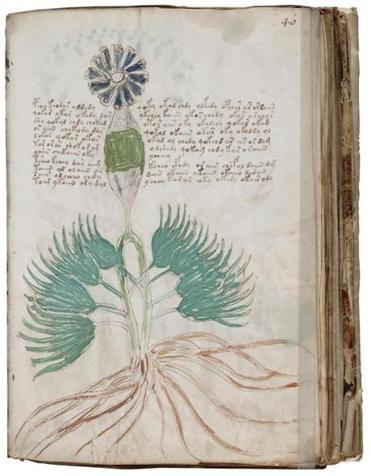 Why scholars can't resist the uncrackable Voynich manuscript