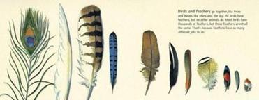 "Illustrations from ""Feathers: Not Just for Flying."""